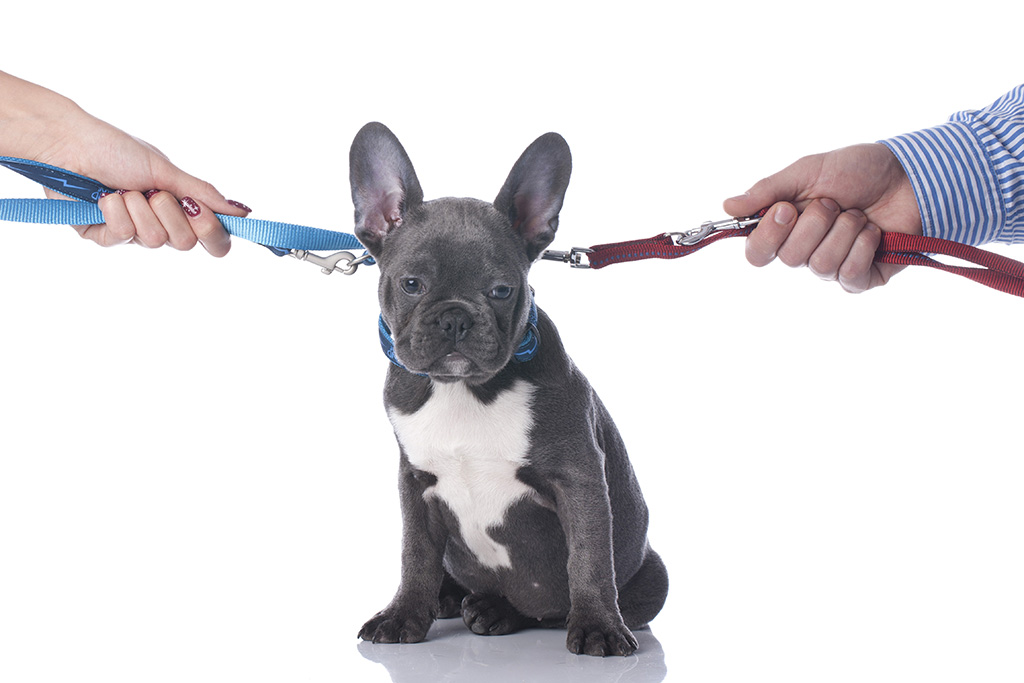 Who Walks The Dog Now? Pet Custody Issues In Divorce